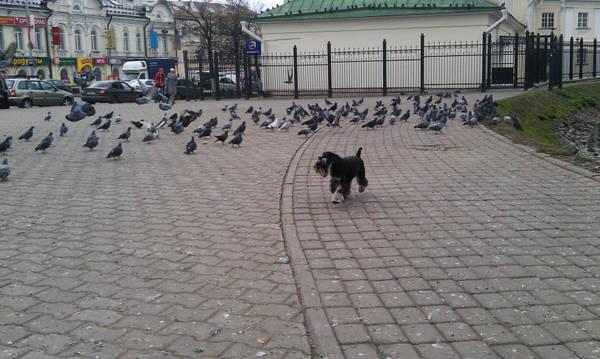http://s5.uploads.ru/t/HtEoz.jpg