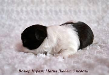 http://s5.uploads.ru/t/IWzGx.jpg