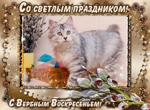 http://s5.uploads.ru/t/IohUq.jpg