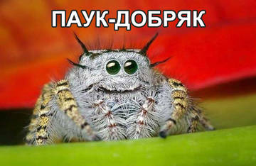 http://s5.uploads.ru/t/Js82c.jpg