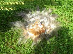 http://s5.uploads.ru/t/Jtik3.jpg