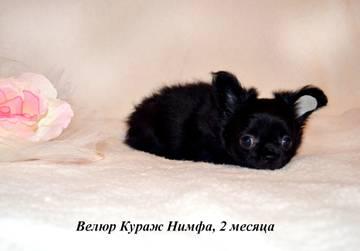 http://s5.uploads.ru/t/LZH5w.jpg