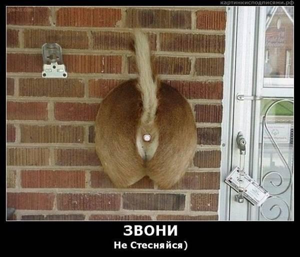 http://s5.uploads.ru/t/MqkmU.jpg
