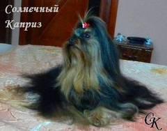 http://s5.uploads.ru/t/NXsRV.jpg