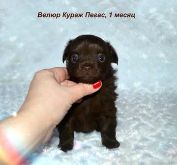 http://s5.uploads.ru/t/NaMrQ.jpg