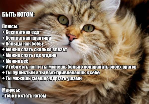 http://s5.uploads.ru/t/OIQEj.jpg