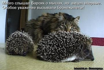 http://s5.uploads.ru/t/OLdjF.jpg