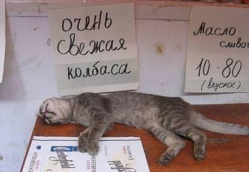 http://s5.uploads.ru/t/OsUAf.jpg