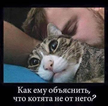 http://s5.uploads.ru/t/PxsLR.jpg