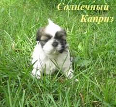 http://s5.uploads.ru/t/QEbCL.jpg