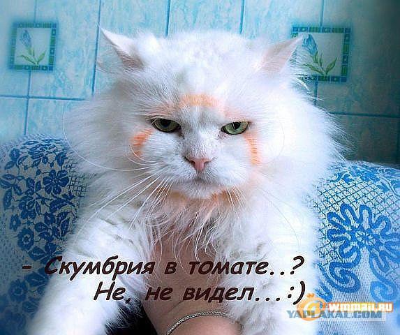 http://s5.uploads.ru/t/QhMYa.jpg