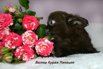 http://s5.uploads.ru/t/RIgHp.jpg