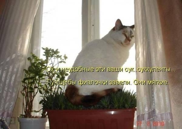 http://s5.uploads.ru/t/RelzD.jpg