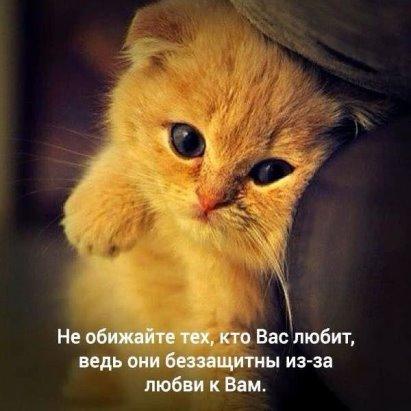 http://s5.uploads.ru/t/Ru31D.jpg