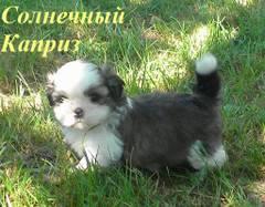 http://s5.uploads.ru/t/RynwS.jpg