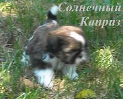 http://s5.uploads.ru/t/S0tyo.jpg