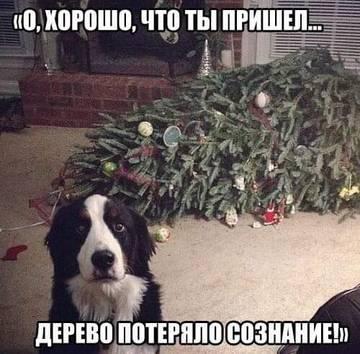 http://s5.uploads.ru/t/S2xs9.jpg