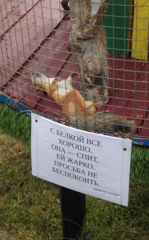 http://s5.uploads.ru/t/SYuh6.jpg