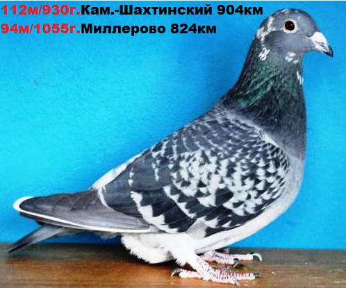 http://s5.uploads.ru/t/TKxkv.png
