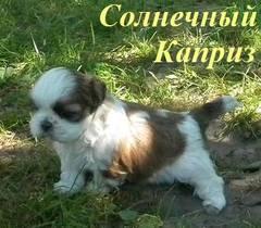 http://s5.uploads.ru/t/TLhb5.jpg