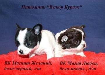 http://s5.uploads.ru/t/UMCaj.jpg