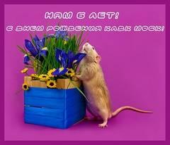 http://s5.uploads.ru/t/VECzU.jpg