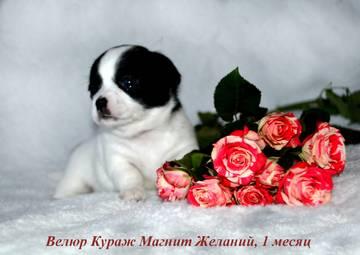 http://s5.uploads.ru/t/W7n4Y.jpg