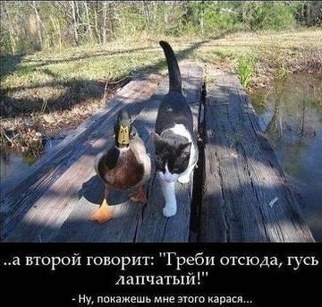 http://s5.uploads.ru/t/WMNf1.jpg