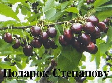 http://s5.uploads.ru/t/WU8MO.jpg