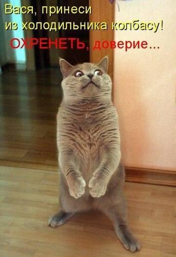 http://s5.uploads.ru/t/XsSBe.jpg