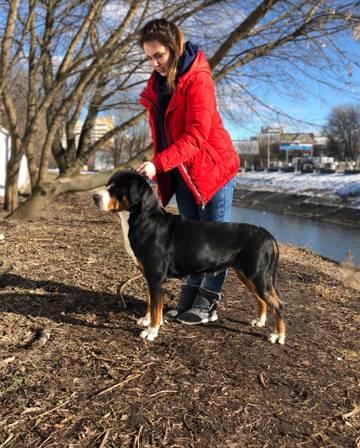 Услуги хендлера - подготовка и показ собак на выставках