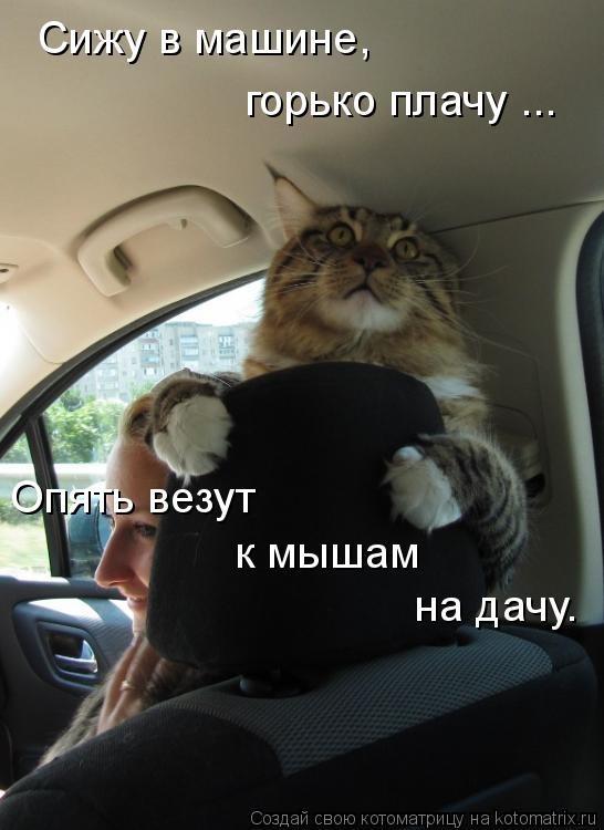 http://s5.uploads.ru/t/YQbUM.jpg
