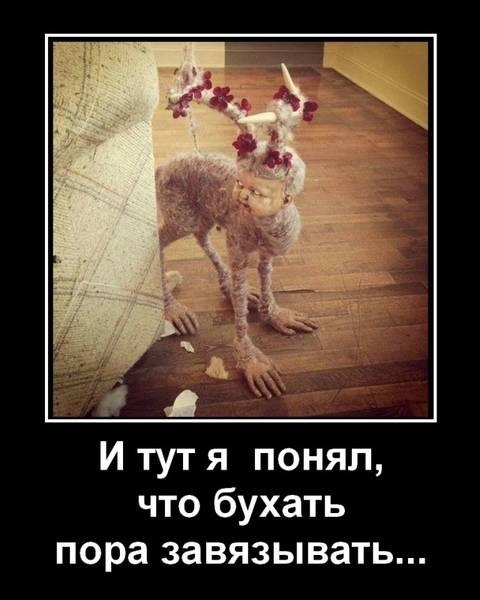 http://s5.uploads.ru/t/YVCvs.jpg