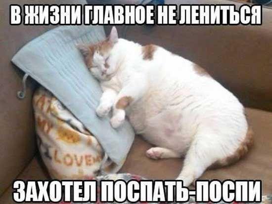 http://s5.uploads.ru/t/YXjPn.jpg