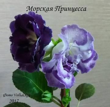 http://s5.uploads.ru/t/ZOkLW.jpg