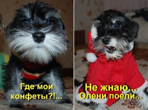 http://s5.uploads.ru/t/ZjfLt.jpg