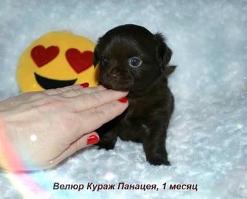 http://s5.uploads.ru/t/Zuk4o.jpg