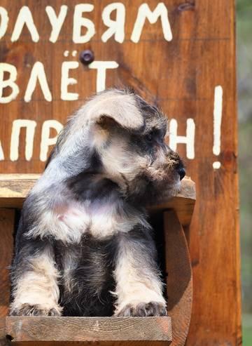 http://s5.uploads.ru/t/aTQxj.jpg