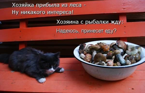 http://s5.uploads.ru/t/ajXMA.jpg