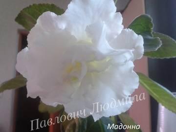 http://s5.uploads.ru/t/bJcQM.jpg