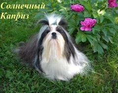 http://s5.uploads.ru/t/dWaVc.jpg