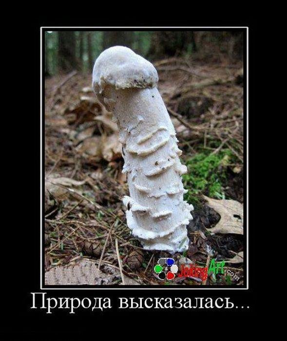 http://s5.uploads.ru/t/dky9e.jpg