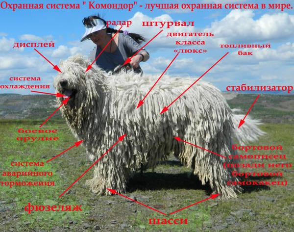 http://s5.uploads.ru/t/fmogB.jpg