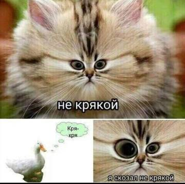 http://s5.uploads.ru/t/gWr68.jpg