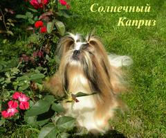 http://s5.uploads.ru/t/gY9vG.jpg