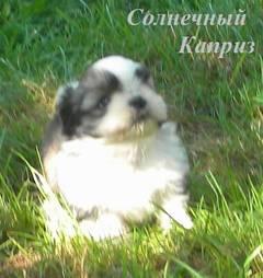 http://s5.uploads.ru/t/hLPg7.jpg
