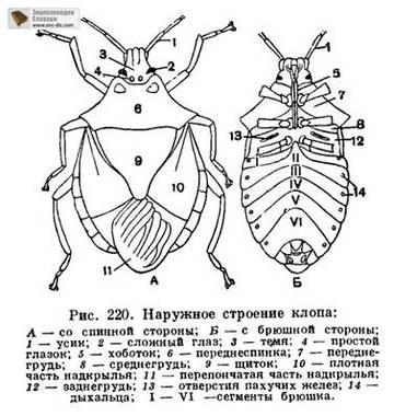 http://s5.uploads.ru/t/hNKbS.jpg