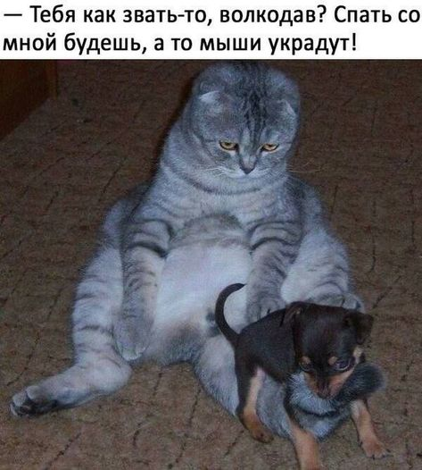 http://s5.uploads.ru/t/inFVo.jpg