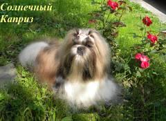 http://s5.uploads.ru/t/j3MCu.jpg
