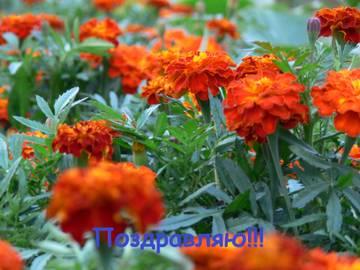 http://s5.uploads.ru/t/jRevE.jpg